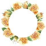 Le rose gialle dell'tè-ibrido del Wildflower fioriscono la corona in uno stile dell'acquerello Immagine Stock Libera da Diritti
