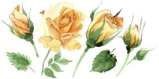 Le rose gialle dell'tè-ibrido del Wildflower fioriscono in uno stile dell'acquerello isolate Immagine Stock Libera da Diritti