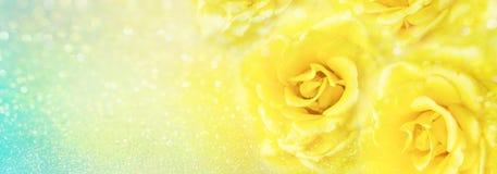 Le rose gialle fioriscono il fondo romanzesco molle con bello scintillio illustrazione vettoriale
