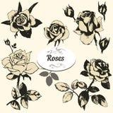 Le rose hanno impostato Fotografia Stock