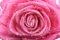 Le rose a monté avec la rosée photo stock