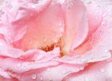 Le rose a monté avec la rosée (plan rapproché, fond naturel) image stock