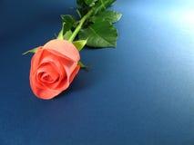 Le rose a monté sur le fond texturisé bleu images stock