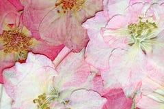 Le rose pressé fleurit le fond Image libre de droits