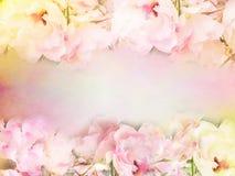 le rose rosa fioriscono il confine e la struttura nel colore d'annata per il fondo del biglietto di S. Valentino Fotografie Stock