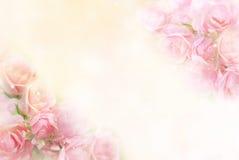 Le rose rosa fioriscono il fondo molle del confine per il biglietto di S. Valentino