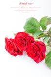 Le rose rosse su un fondo bianco con il campione mandano un sms a Fotografia Stock