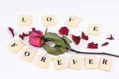 Le rose rouge sec a monté avec le texte de caractère d'amour Image stock