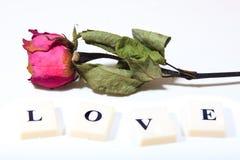 Le rose rouge sec a monté avec le texte de caractère d'amour Images stock