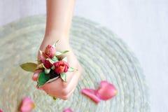 Le rose s'est levé à disposition et des pétales de rose Image stock