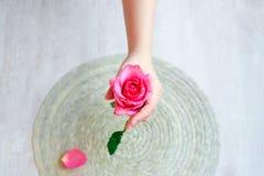 Le rose s'est levé à disposition et des pétales de rose Images libres de droits