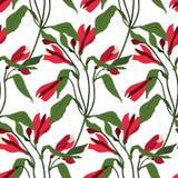 Le rose sans couture de modèle fleurit l'alstroemeria Fond botanique de vecteur Alstromeria Photo stock