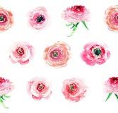 Le rose variopinte dei wildflowers della molla di erbe floreale adorabile meravigliosa specializzata elegante tenera con i germog illustrazione di stock