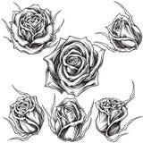 Le rose vector l'insieme 01 Fotografia Stock Libera da Diritti