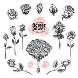 Le rose vector l'insieme Illustrazioni del fiore nello stile di schizzo Immagine Stock Libera da Diritti