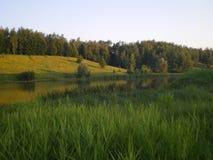 Le roseau vert part sur un étang dans la forêt de distance photos libres de droits