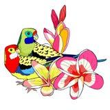Le roseella exotique de perroquet de tropiques Illustration de vecteur Image libre de droits