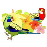 Le roseella exotique de perroquet de tropiques Illustration de vecteur Photographie stock
