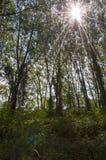 Le rotture del sole attraverso gli alberi Fotografia Stock
