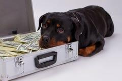 Le rottweiler a mis la tête dans la valise avec l'argent photographie stock