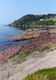 Le rouge bascule la plage de baie de Talland entre Looe et Polperro les Cornouailles Angleterre R-U Photo stock