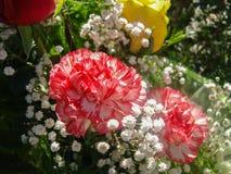 Le rouge, blanc a modelé l'oeillet dans le bouquet photos stock