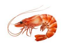 Le rouge a bouilli la crevette de crevette rose ou de tigre d'isolement sur le fond blanc photographie stock libre de droits