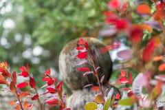 Le rouge a coloré des feuilles sur un buisson pendant l'automne Photo libre de droits