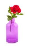 Le rouge coloré a monté dans le vase pourpré Images stock