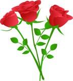 le rouge de bouquet a monté trois Photographie stock