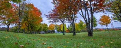 Le rouge de feuilles photographie stock libre de droits