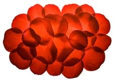 le rouge de pétales a monté images libres de droits