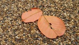 Le rouge en baisse part sur la route tranquille de jardin en automne Photographie stock libre de droits