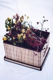 Le rouge et le jaune ont séché des roses dans une boîte sur un fond blanc Bois Images libres de droits
