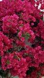 Le rouge fleurit le fond Image stock