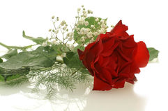 Le rouge gentil a monté avec de petites fleurs blanches images libres de droits