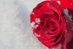 Le rouge a monté Image libre de droits