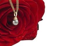 Le rouge a monté avec la perle Photo stock