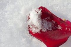 Le rouge a monté dans la neige Photo libre de droits