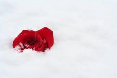 Le rouge a monté dans la neige Photo stock