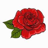 Le rouge a monté Fleur d'isolement sur le fond blanc Photographie stock