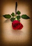 Le rouge a monté Vintage d'or de fond de fleur Image stock