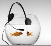 Le rouge pêche la musique de listenig Image libre de droits
