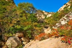 Le rouge part sur le flanc de coteau de la montagne de Zu Photos libres de droits