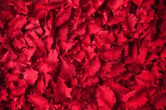 Le rouge sec fleurit le fond de pot-pourri d'aromatherapy photos stock