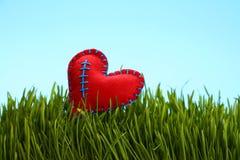 Le rouge a senti la chaleur dans l'herbe verte fraîche au-dessus du ciel bleu Photos stock