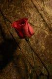 Le rouge triste a monté Photos libres de droits