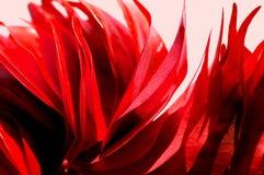 Le rouge vibrant laisse le fond de photo sur pâle - fond rose Aut image stock