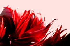 Le rouge vibrant laisse le fond de photo sur pâle - fond rose Aut photos libres de droits
