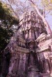 Le rovine del complesso del tempio dei tum Prohm in Cambogia Patrimonio architettonico dell'impero khmer Un capolavoro del mondo immagini stock libere da diritti